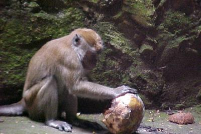 In the Batu Caves there were many figures, families, and offerings to behold. None compared to the two things that I became enthralled with . Monkey & the sun. I watched Monkey cook a melon in a small fire and taste it for doneness every now & then. Oblivious to me and uncaring.
