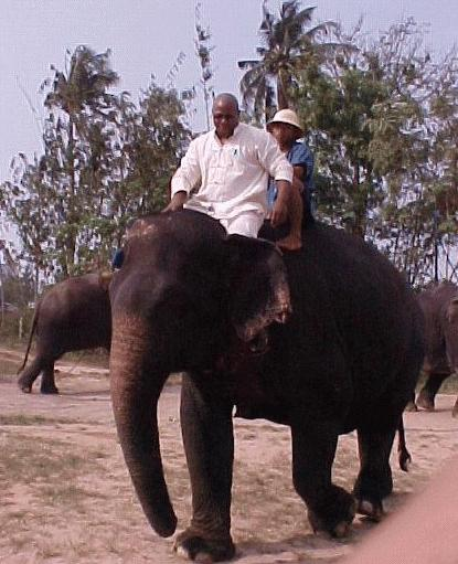 Second only to the King, the number one symbol of Thailand is the venerable elephant.