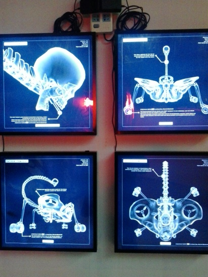 The Uterus Man exhibit at The Museum of Contemporary Art Shanghai.