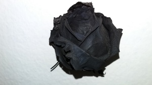 This Black Rose is from an exhibit at The Afro-Brazilian Museum!